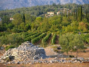 Konavle Valley - Wine and Culinary Tours - Dubrovnik - Adventures Croatia