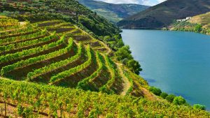 Peljesac Peninsula Vineyard - Peljesac Croatia - Croatia Wine - Adventures Croatia