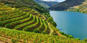 peljesac-peninsula-vineyard